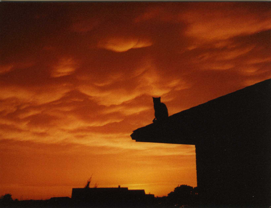 sunset comtemplation photographic note card
